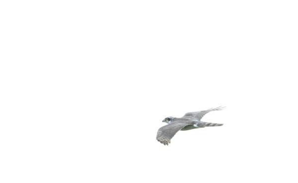 Dsc_0657a